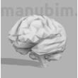 Egyedi agy (low poly), 124x98x105 mm, PLA fehér