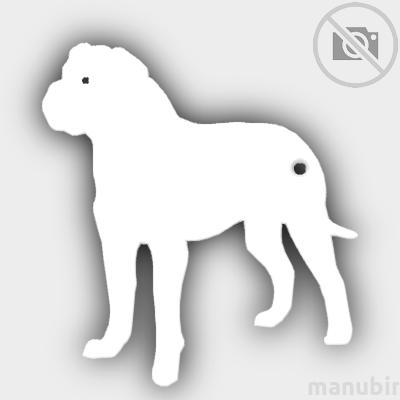 Bullmastiff Shaped Keychain